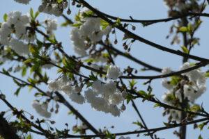 Bayrischzell - Frühling